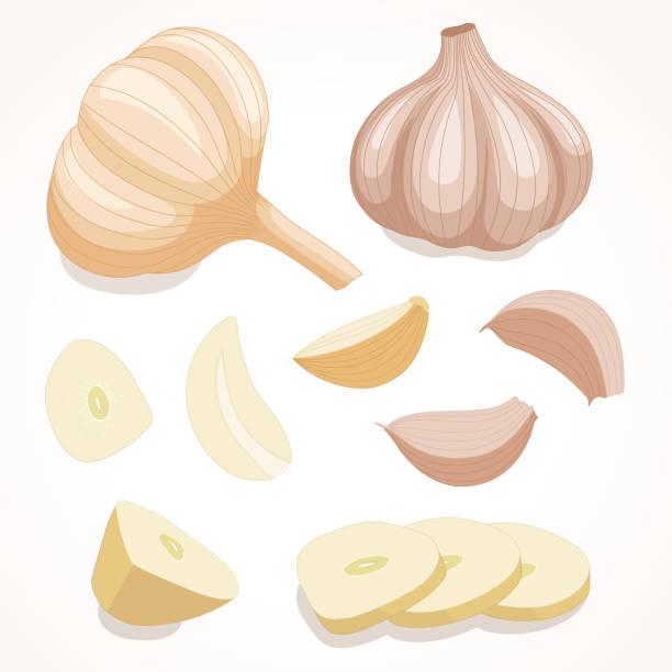 Garlic in various forms. Vector illustration. Fresh whole garlic. Vector illustration.  Cloves and slices garlic isolated on background . garlic stock illustrations