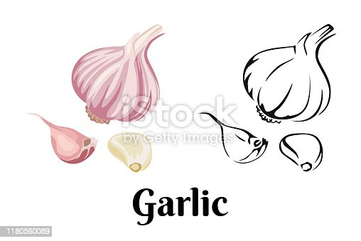 Garlic isolated on white background. Vector color illustration of sliced garlic, garlic clove, garlic bulb in cartoon flat style and black and white outline. Vegetable Icon.
