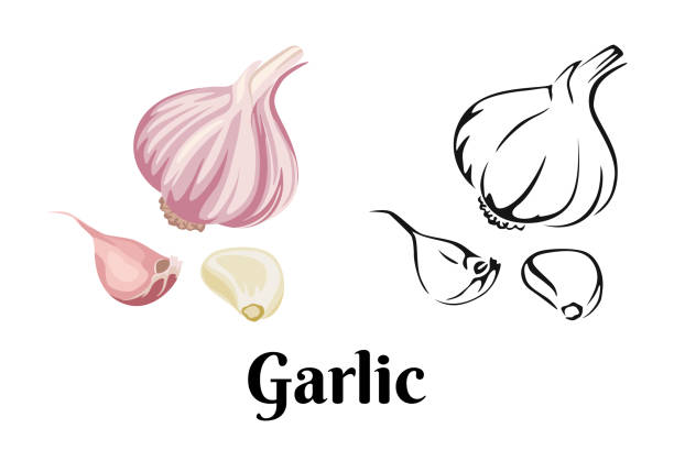 Garlic isolated on white background. Vector color illustration of sliced garlic, garlic clove, garlic bulb in cartoon flat style and black and white outline. Vegetable Icon. Garlic isolated on white background. Vector color illustration of sliced garlic, garlic clove, garlic bulb in cartoon flat style and black and white outline. Vegetable Icon. garlic stock illustrations