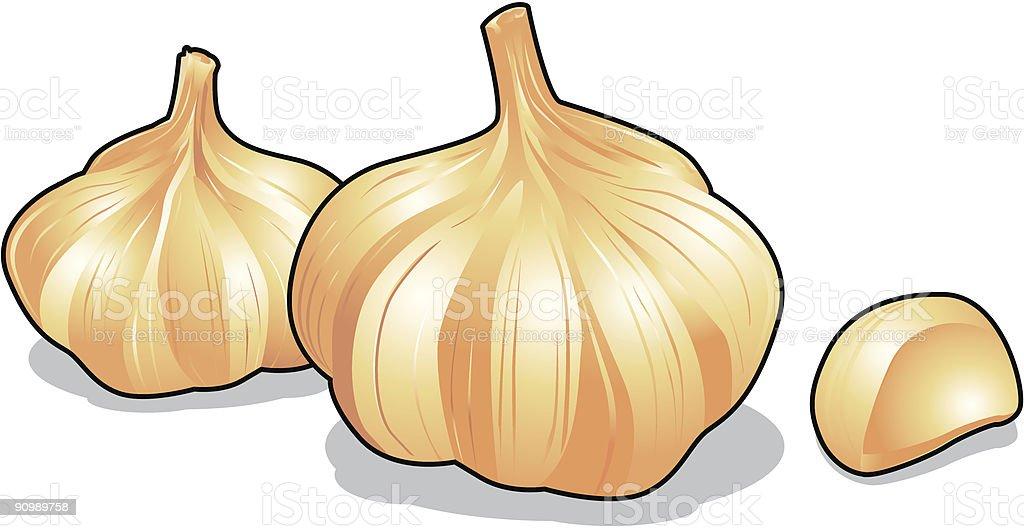 Garlic vector icons royalty-free garlic vector icons stock vector art & more images of cartoon