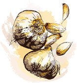 Grunge style garlic - vector illustration