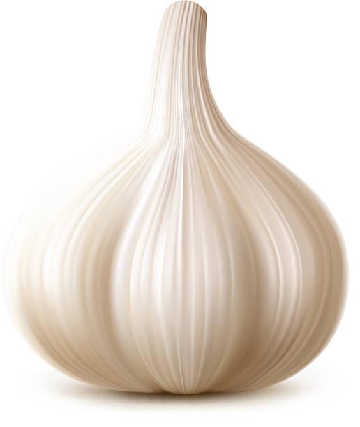 Garlic Vector illustration of garlic isolated on white background garlic stock illustrations