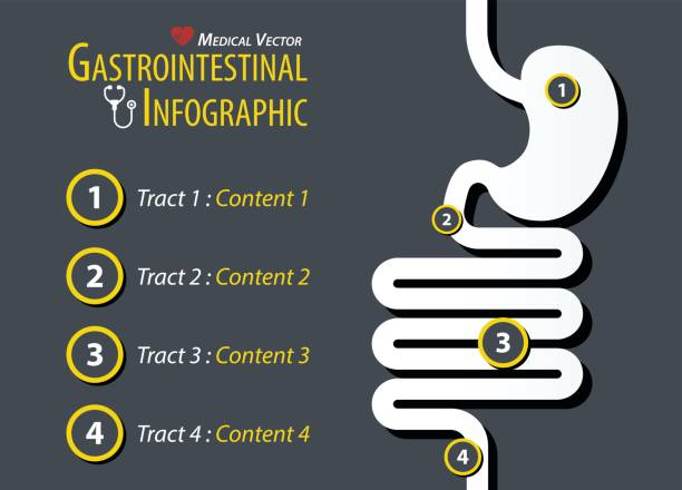 Gastrointestinal Infographic . Flat design . Gastrointestinal Infographic . Flat design . digestive system stock illustrations