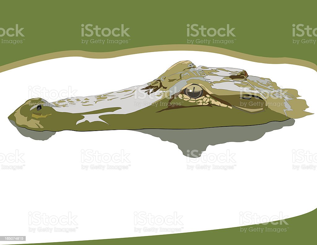 Gator on the Golf Course royalty-free stock vector art
