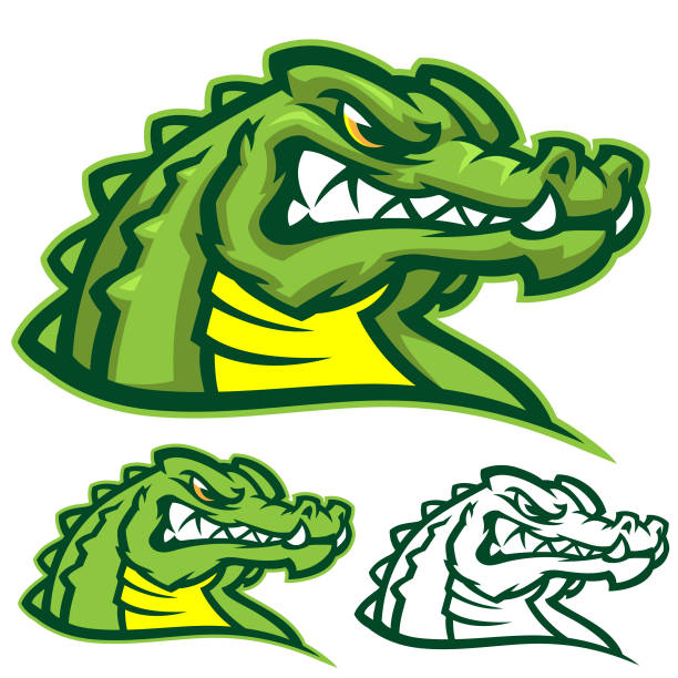 gators sports kit - alligator stock illustrations