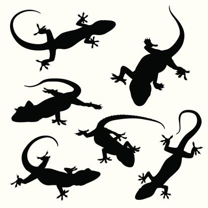 Gecko silhouettes