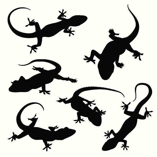 gecko silhouettes - reptiles stock illustrations