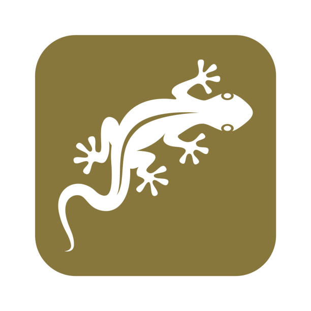 gecko - reptiles stock illustrations