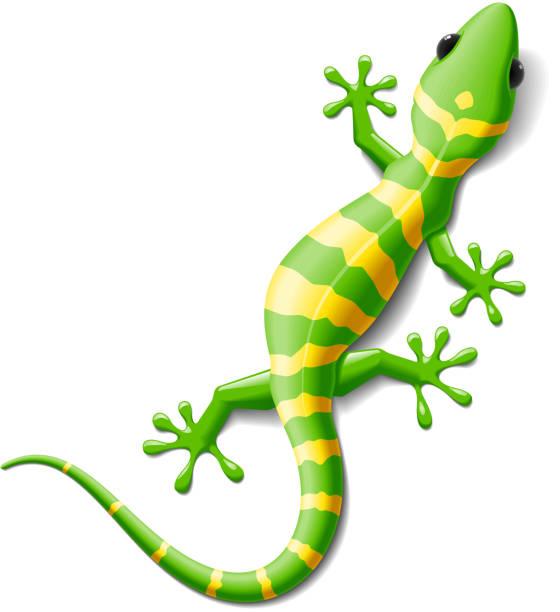 gecko - gecko stock illustrations, clip art, cartoons, & icons