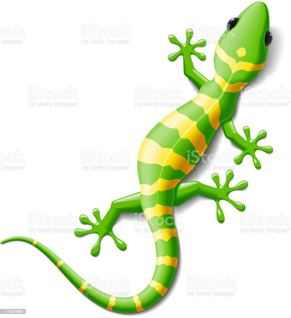 royalty free gecko clip art  vector images   illustrations chameleon clip art images chameleon clip art drawing