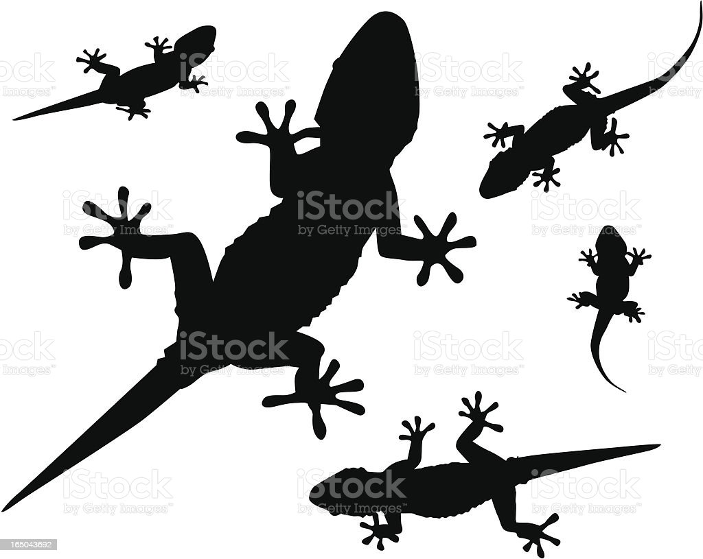 Gecko (Vector) royalty-free gecko stock vector art & more images of animal