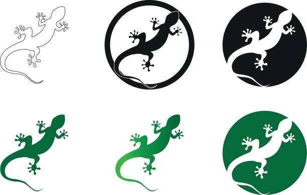 gecko vector illustration isolated on a white background - gecko stock illustrations, clip art, cartoons, & icons