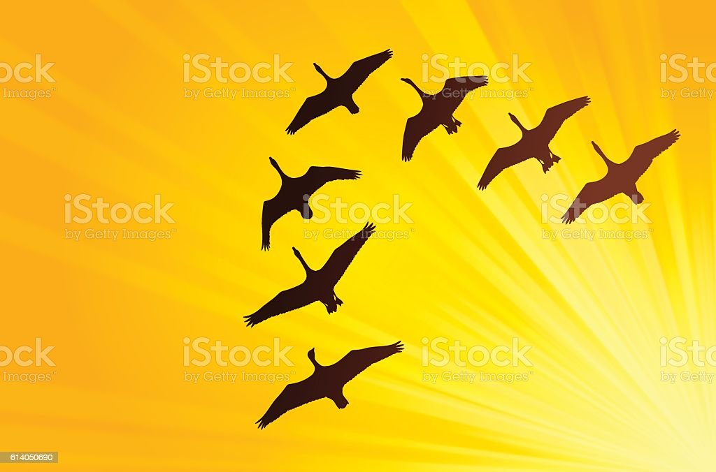 Geese silhouettes flying in a V formation. EPS 10 file. Transparency...
