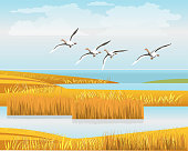 A flock of wild geese flying over the reeds. Beautiful landscape. Vector illustration