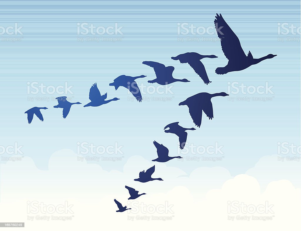 Geese flying south in a v formation.