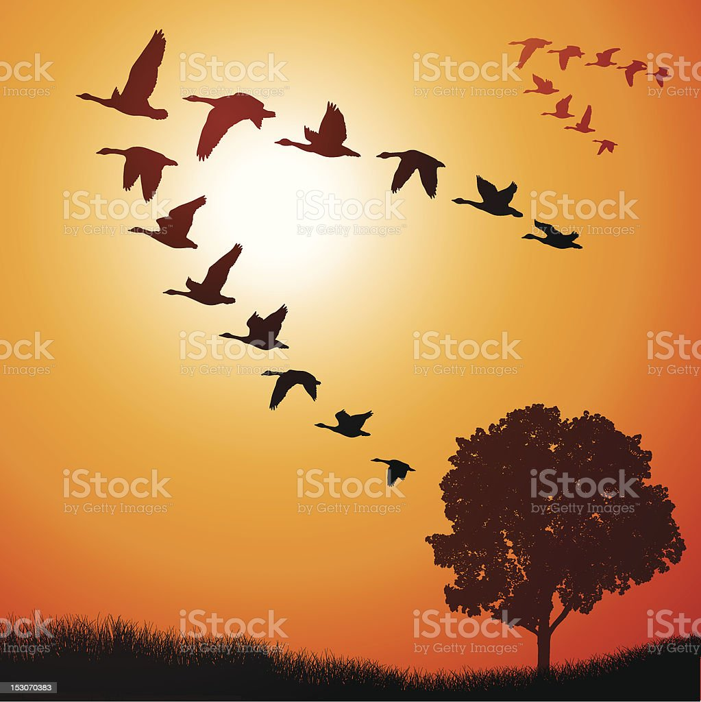 Geese Going South vector art illustration