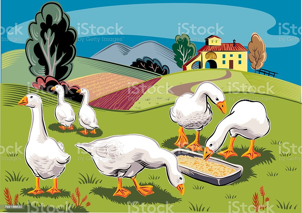 geese in landscape royalty-free stock vector art
