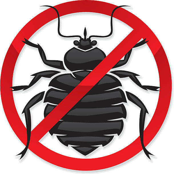 how long bed bug infestation