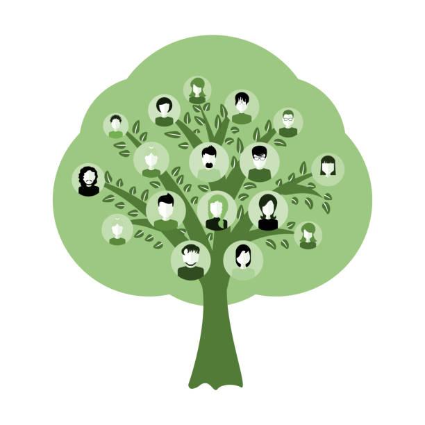 illustrations, cliparts, dessins animés et icônes de arbre de généalogie pour illustration d'ancêtres adn isolé - arbres généalogiques