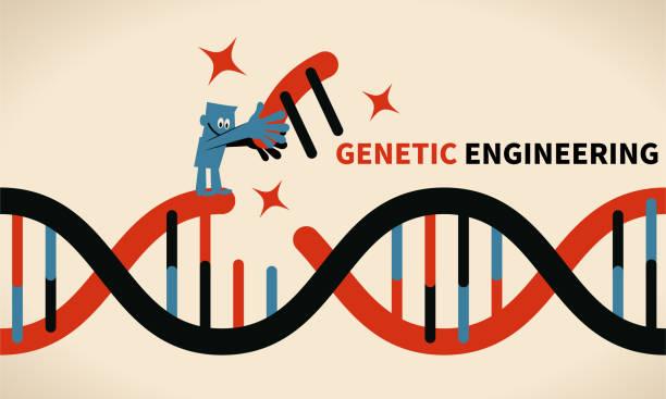 Genetic engineering, GMO and Gene manipulation concept vector art illustration