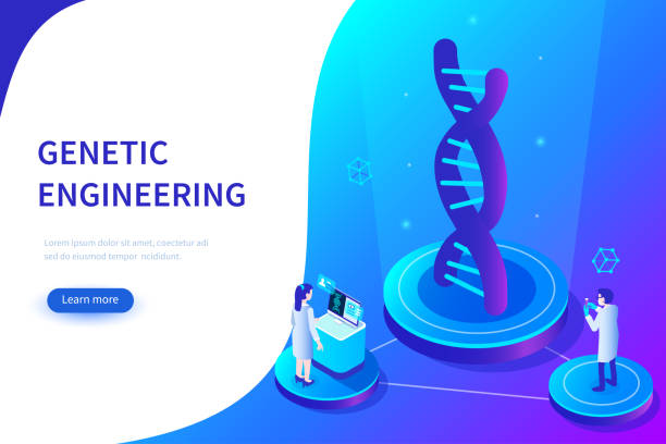 genetic engineering Genetic engineering concept. Can use for web banner, infographics, hero images. Flat isometric vector illustration isolated on white background. chromosome stock illustrations