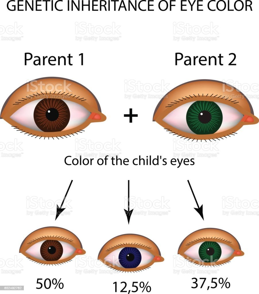 Genetic Inheritance Of Eye Color Brown Blue Green Eyes Infographics