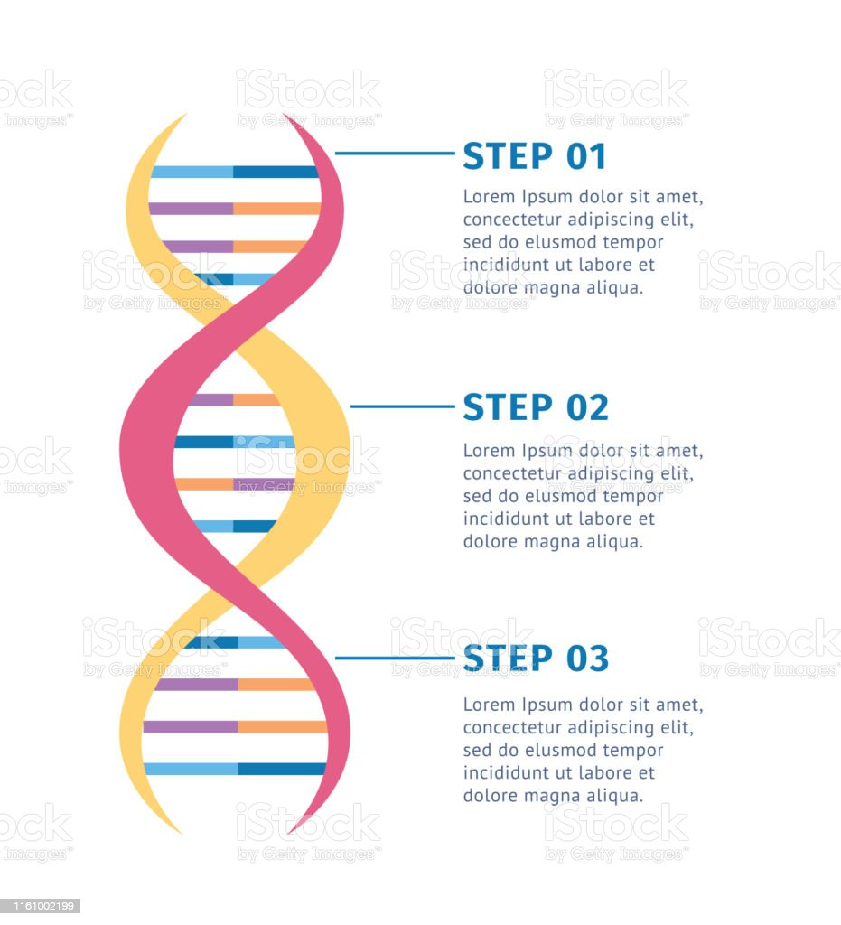 Genetic Structure Of Dna Molecule Vector Illustration Isolated On White Background Stock Illustration Download Image Now Istock