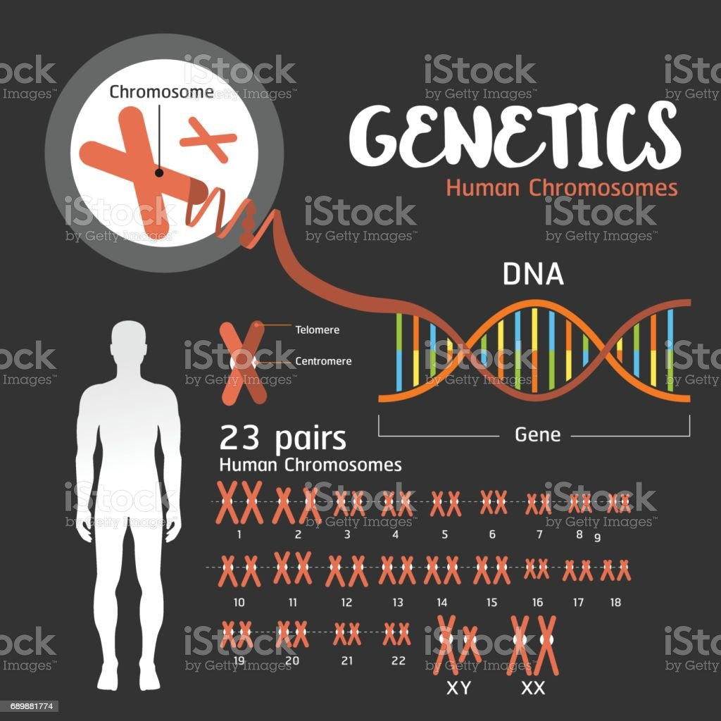 Genetics DNA structure vector art illustration