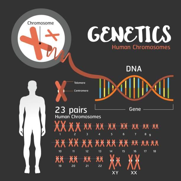stockillustraties, clipart, cartoons en iconen met genetica dna-structuur - chromosoom