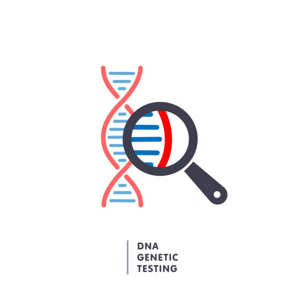 DNA, genetics research. dna chain in magnifying glass sign. genetic engineering, cloning, paternity testing, DNA analysis DNA, genetics testing icon. dna chain in magnifying glass sign. genetic engineering, cloning, paternity testing, DNA analysis. vector illustration test drive stock illustrations