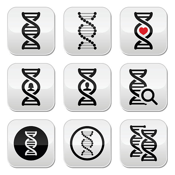 DNA, genetics vector buttons set Vector buttons set of DNA isolated on white carbohydrate biological molecule stock illustrations