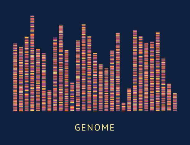 Genome data pattern visualization diagram Genome data pattern visualisation diagram. DNA sequence and chromosome mapping analytics, colorful genomic big data analysis - vector illustration on black background genomics stock illustrations