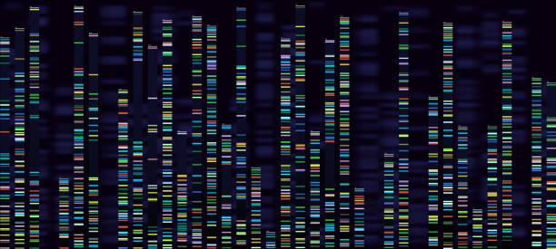 ilustraciones, imágenes clip art, dibujos animados e iconos de stock de visualización de análisis genómico. genomas de dna sequencing, mapa genético de ácido desoxirribonucleico y la secuencia del genoma analizarán el concepto de vector - adn