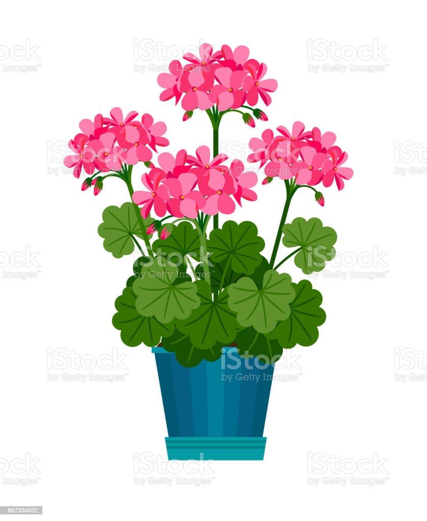 Plante dint rieur g ranium en pot de fleur cliparts for Geranium d interieur