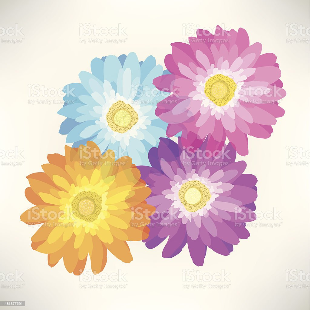 Gerber Daisy Flower - Spring Season royalty-free stock vector art