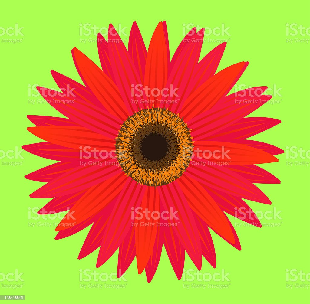 Gerber Daisy Stock Vector Art More Images Of Color Image 118418845