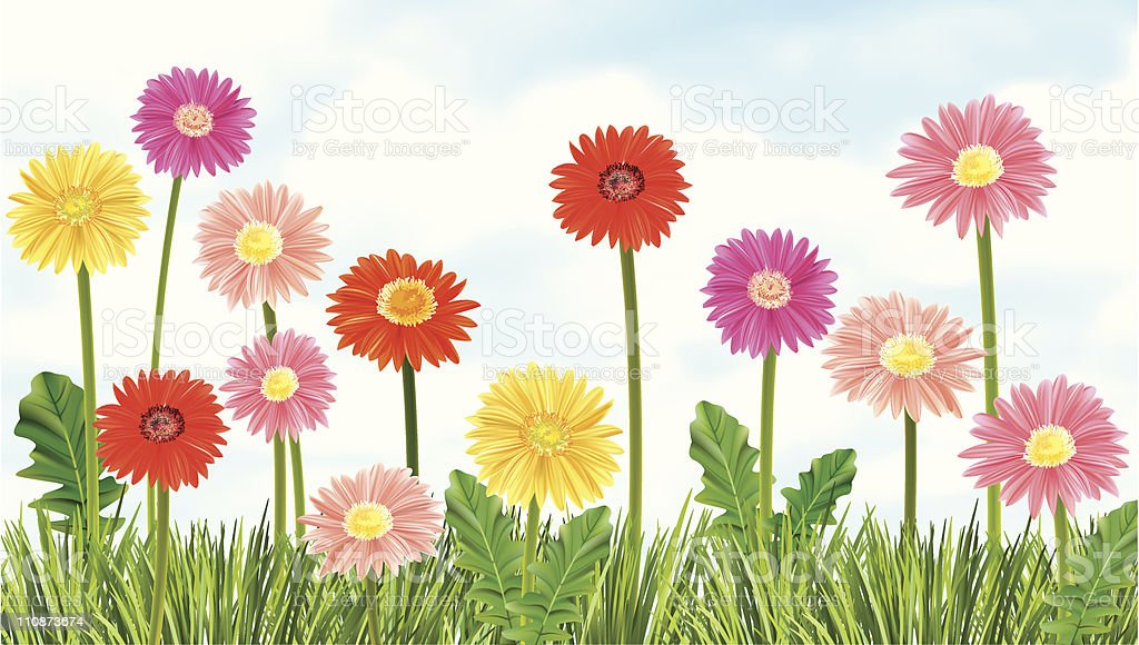Gerbera Daisies Growing In The Grass vector art illustration