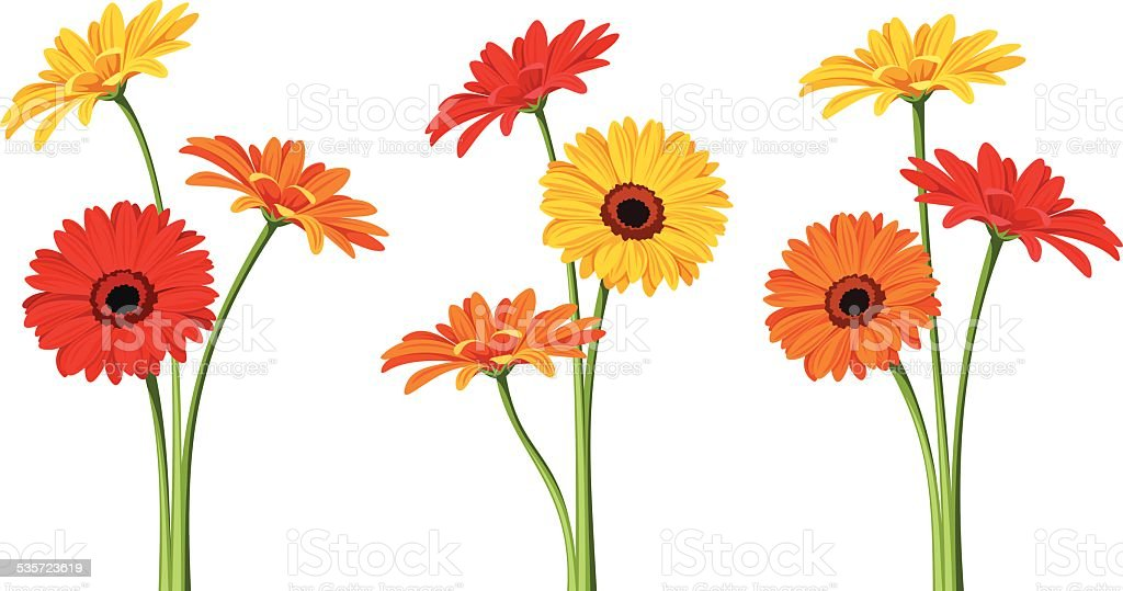 Gerbera flowers. Vector illustration. vector art illustration