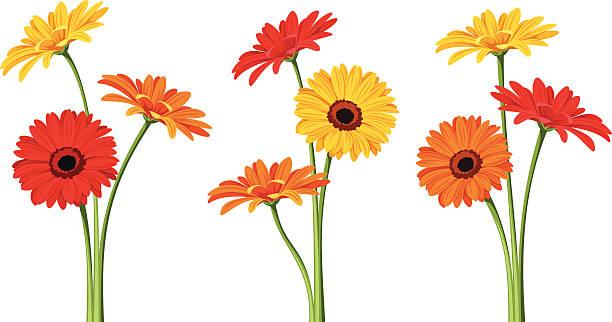 Gerbera Blumen. Vektor-illustration. – Vektorgrafik