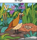 German alphabet, letter V (quail, bird and background)