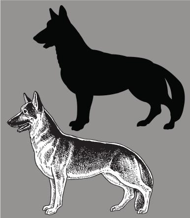 German Shepherd - Dog, domestic pet