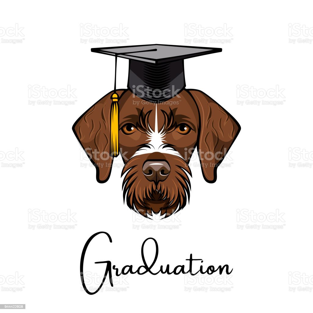 German Wirehaired Pointer Drahthaar Graduate Graduation Hat Vector ...
