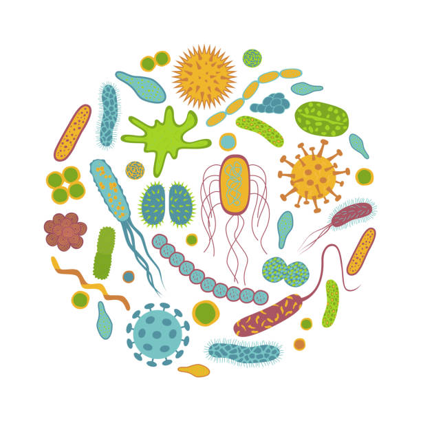 Germs and bacteria  icons  isolated on white background. Germs and bacteria  icons  isolated on white background. Microbiome  in  flat cartoon style.  Round design  vector  illustration of  microorganisms. unhygienic stock illustrations