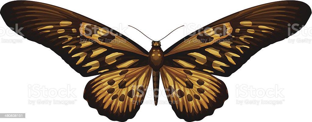 Гигантский Африканских Парусникpapilio Antimachus — стоковая ...