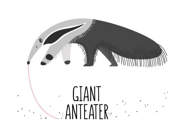Giant anteater Illustration of the giant anteater Giant Anteater stock illustrations