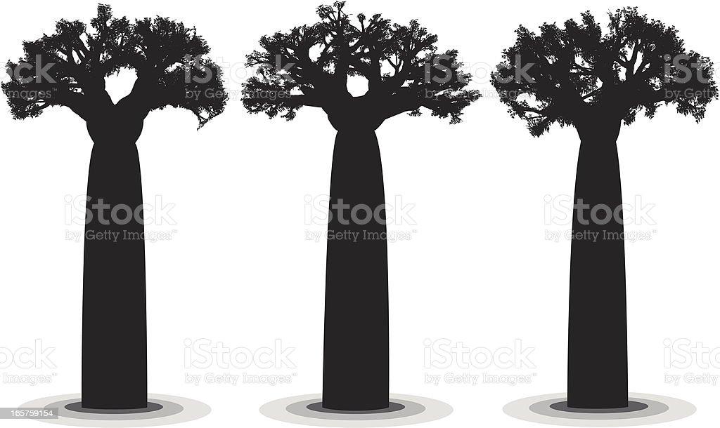 Giant Baobab vector art illustration