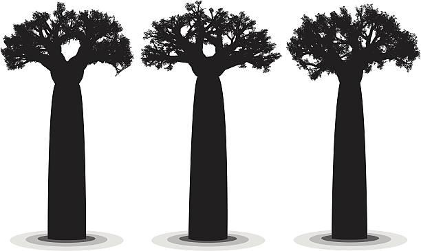Giant de Baobab - ilustración de arte vectorial