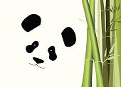 picture of a giant panda bear and bamboo on white background