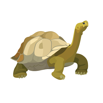 Giant tortoise animal. Turtle reptile in nature wildlife. Vector