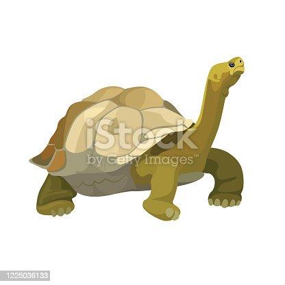 istock Giant tortoise animal. Turtle reptile in nature wildlife. Vector 1225036133